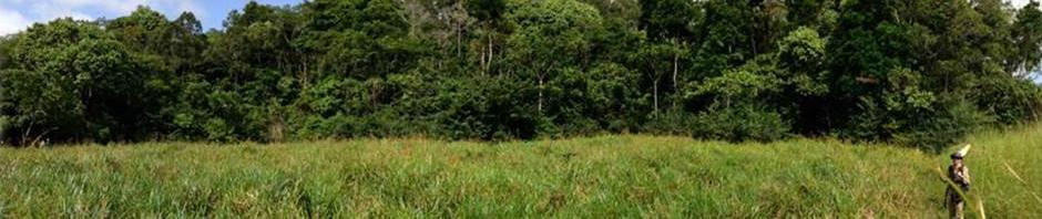 bandeaux site Gabon (T Decaens/nmentomo)