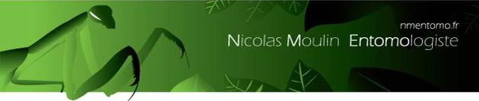logo nmentomo site(2)