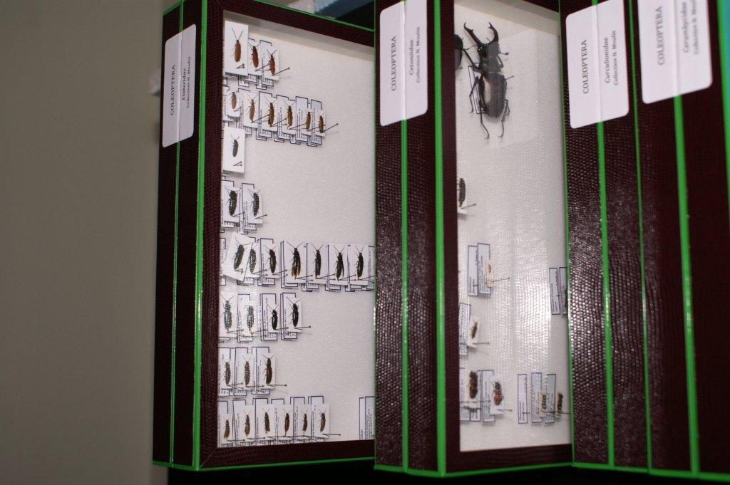 Bo tes de collection d insectes type museum nmentomo - Boite a insecte ...